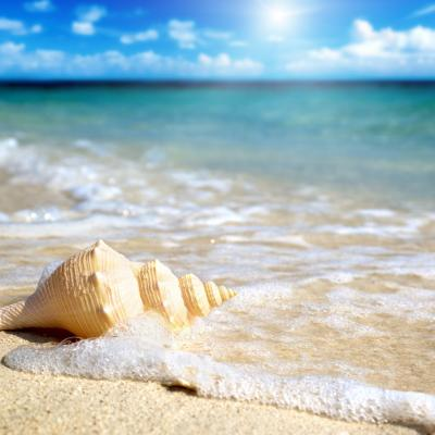 Shell On The Beach Amazing Wallpapers